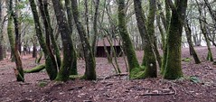 4022-Reserva de Marcelle Natureza en Outeiro de Rei (Lugo).