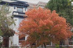 Tree as Puzzle (James0806) Tags: trees orange washington districtofcolumbia autumnleaves autumncolors