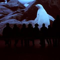 White penguin (un sablier) Tags: white paris penguin albino manchot lvmh pierrehuyghe ajourneythatwasnt fondationlouisvuitton