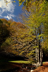 Autunno calabro (iana) Tags: autumn mountain tree italia albero autunno montagna calabria pollino