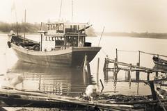 Free range chooks (cheezepleaze) Tags: boat chooks bw mono mist dawn vietnam communist fishingboat jetty hss ricketydock river explored