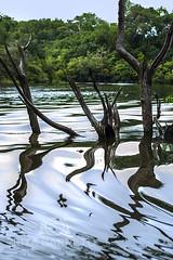 Floresta Alagada (Rita Barreto) Tags: floresta florestaalagada florestaamazônica riojuma autazes amazonas amazônia flora natureza nortedobrasil américadosul brasil cheianaamazônia água águadoce fluvial rio chuvas troncos árvores mata