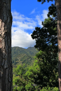 Mount Te Aroha between 2 Trees. (Explored)