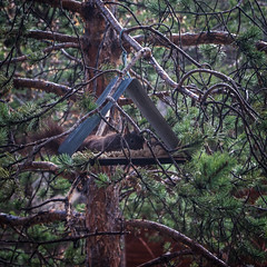 L'écureuil (jemazzia) Tags: outside extérieur animal repas food écureuil