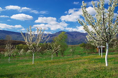 Цветница (sevdelinkata) Tags: spring sky bulgaria