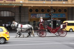 Horse drawn carriage heads along the tram tracks on Flinders Street (Marcus Wong from Geelong) Tags: piss shit stink smell odour horse drawn carriage touristtrap horsedrawncarriage melbourne melbournecbd