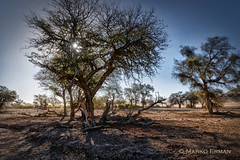 Dried river bed (marko.erman) Tags: namibia namibdesert desert aride dried dry river bed trees rocks dust landscape sony backlight shadow hot travel outside wideangle