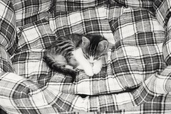 In black and white I look better (mcg0011) Tags: kitty bw monocromatico cute gatito katze kat katt kot felino mascota pet manuelcarrasco