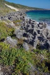 Cemented beach feature with Tetragonia decumbens, Cosy Corner, near Augusta, WA, 15/02/17 (Russell Cumming) Tags: plant weed tetragonia tetragoniadecumbens aizoaceae rock limestone cosycorner augusta margaretriver westernaustralia