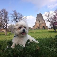 Icey... my little dog ❤️🐶🐾 (ilirjacellari) Tags: villagordiani mydog dogs littledog