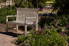 A great new week ahead to all my friends. HBM (Irina1010) Tags: bench white flowers sunny park beautiful canon