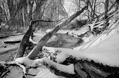 OMFD Snow & Ice Storm 2921 (dweible1109) Tags: snowscape winter ice penna 1024mmnikkor d5100 omfd outmyfrontdoor scenic landscape bw