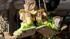 Monaco - conigli (fabiorizzo72) Tags: mercatini germania germany coniglio colori pasqua rabbit