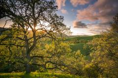 Joseph D Grant (tompost) Tags: greenhills nature landscape josephdgrant regionalpark bayarea sanjose green lush spring