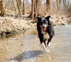 13/52 Weeks for Maddy (ginam6p) Tags: dog water river toronto 2017