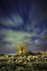 El Arbol de Villora (Ordisi fotografía) Tags: arbol villora nocturna ordisi