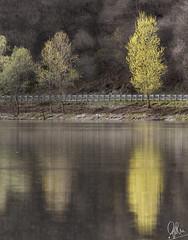 (Gi_shi) Tags: nikon nikonitalia iamnikon d7200 nature natura tree alberi reflection reflections ticino fiume river