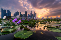 Before Burn (My Pixel Magic) Tags: sunset burning sky raincloud cityscape waterscape reflection water lily cityview citylandscape buildings dramaticsky dramatic