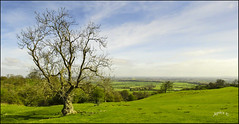 The Spring Greening. Part 10.. (Picture post.) Tags: landscape nature green springtime trees fields hills bluesky clouds shadows paysage arbre