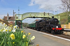 Spring on the Swanage (Deepgreen2009) Tags: swanage railway dorset purbeck preserved steam br standard tank engine 80146 corfecastle station spring daffodils train