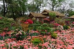 Flower carpet (marko.erman) Tags: flowers garden suzhou jiangsu china harmony unesco world heritage site classical sony jardin carpet worldheritagesite