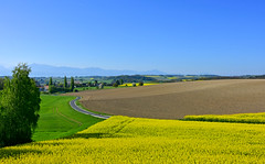 Colline du Brichy (Diegojack) Tags: gollion vaud suisse paysages labours colza cultures brichy colline re campagne est belle