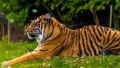 Burgers Zoo-3 (Louis Swart) Tags: dierenpark