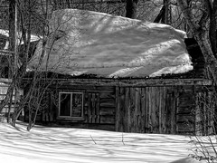 ... (Jean S..) Tags: shed outdoor blackandwhite bw monochrome window door shadows trees