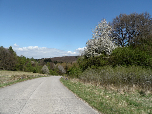 Road to spring