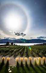 Quail's Gate (cec403) Tags: sun lake canada vineyard vines wine britishcolumbia okanagan winery grapes quailsgate westkelowna