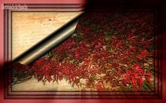 l'AUTOMNE est ses belles couleurs ! (christabelle12300 (très peu présente)-) Tags: superb borntobewild bestgroup artonflickr eperke