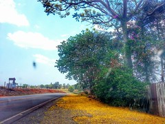 traces of spring (Rodrigo :) Tags: road sky cloud flower color tree colors spring colorful pattern ground hdr