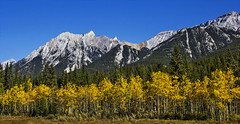 Rocky Mountain Autumn Layers (LostMyHeadache: Absolutely Free *) Tags: blue autumn trees sky mountain mountains green fall nature leaves yellow forest canon rockies nationalpark branches cliffs banff rockymountains peaks forests fromthecar slopes banffnationalpark canadianrockies davidsmith calgaryalbertacanada eos60d