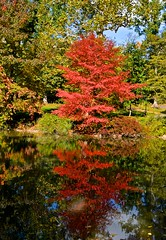 Fall reflections in the pond, Central Park (David McSpadden) Tags: thanks for many views