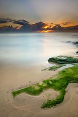 Second Rising (Rodney Campbell) Tags: sky plant green water sunrise moss rocks australia newsouthwales coogee cpl rossjonespool gnd09 littlestopper