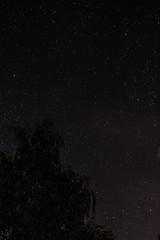 Nightsky (Groman123) Tags: longexposure tree night canon germany dark stars deutschland eos nacht outdoor cc creativecommons baum dunkel sterne sauerland langzeitbelichtung ccbysa drausen 700d astrometrydotnet:status=solved astrometrydotnet:id=nova880988