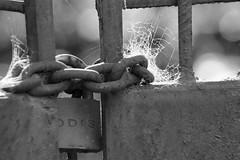 Seguridad Elástica (Inmortalizando momentos) Tags: sony slt cerradura abandono tiempo tela arañas candado a58 55300