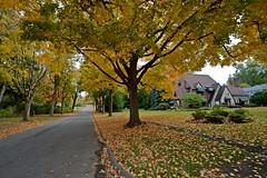 Autumn in Avondale (chrishowardphotography.com) Tags: fallcolors autumncolors autumntrees falltrees beautifulautumn autumninohio gorgeousautumn scenicautumn autumninavondale