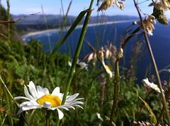 Daisy chain (Mashthetics) Tags: beach oregon coast pacific or lookout daisy pacificnorthwest viewpoint manzanita pacnw