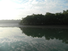Sundarban Tour - 12 (smwrindia) Tags: tiger royalbengaltiger sundarbantiger sundarbantourpackage sundarbankolkata sundarbanindia sundarbantrip sundarbantravel sunderbantour