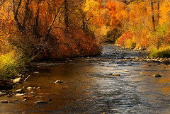 Fall on the River (arbyreed) Tags: orange green fall yellow river fallcolors provoriver provocanyon utahcountyutah arbyreed