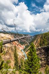 Yellowstone River View (Steve Whitworth) Tags: us nikon yellowstone wyoming yellowsoneriver nikon1635mmf40 d800e nikond800e