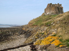 Images of Lindisfarne Castle - 2 (Tony Worrall) Tags: county uk flowers wild england sky  castle history nature clouds island stream tour open place famous hill north visit scene location tourist tony historic holy northumberland area northeast iconic pilgrimage holyisland lindisfarne borders attraction 2014 lindisfarnecastle worrall 2014tonyworrall