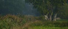 Life in the slow lane (jump for joy2010) Tags: uk blue trees england orange tractor vintage oak sid logging somerset september fordson 2014 countryliving dexta superdexta somersetlevels bleadney