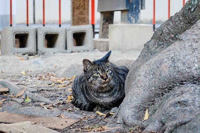 Today's Cat@2014-10-31