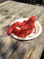 Lobster meal in Maine