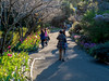 Spring gardens, Sydney Botanical Gardens (EWin1) Tags: sydney australia sydneybotanicalgardens sydneyoperahouse