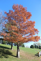 Tree (laedri52) Tags: park tree nebraska omaha hazan aa heartlandofamericapark sonbahar gz