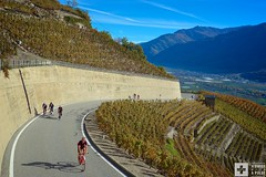 Higher in the vineyards (A Swiss With A Pulse) Tags: autumn switzerland suisse vineyards wallis valais indiansummer rhonevalley