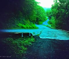 Smoky Mountains Green.. (imashwin) Tags: travel green nature beautiful beauty rain weather pretty day tennessee scenary roads mothernature slope
